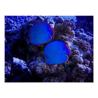 Tropical Undersea Fish Swimming In Coral Poster