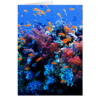 Tropical Underwater Ecosystem Card