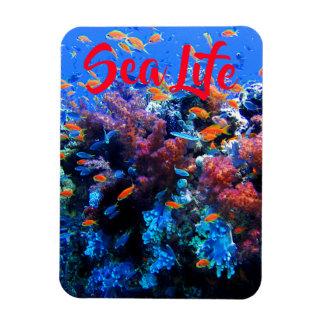 Tropical Underwater Ecosystem Magnet