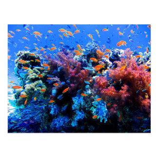 Tropical Underwater Ecosystem Postcard
