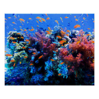 Tropical Underwater Ecosystem Poster