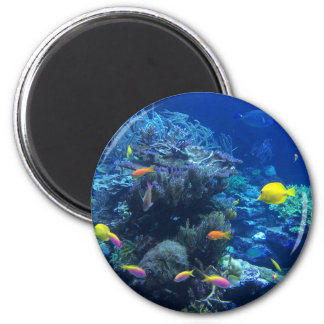 Tropical underwater fish magnet
