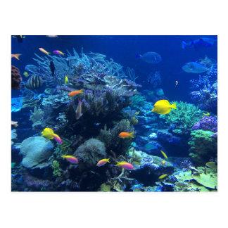 Tropical underwater fish postcard