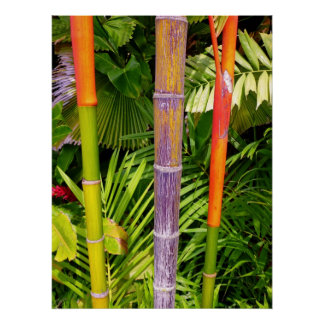 Tropical Wax Palms Poster