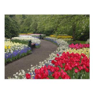 Trottoir par des tulipes, jonquilles, et cartes postales