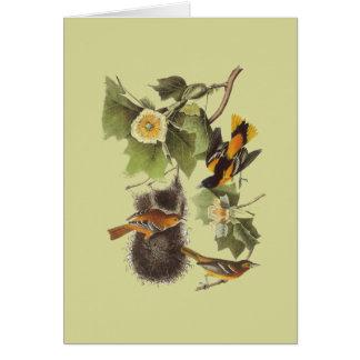 Troupial Oriole Audubon Birds Card