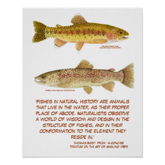 Trout Poster