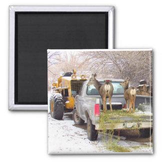 Truck Deer Square Magnet