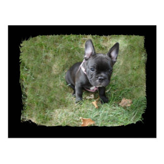 Trudy the French Bulldog Postcard