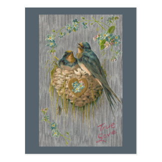 True Love for Swallows in Nest Postcard