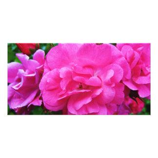 True Rose Photocard Photo Cards