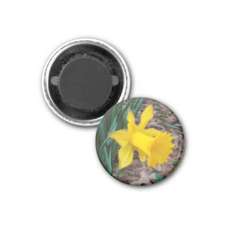 Trumpet Daffodil Small Round Magnet