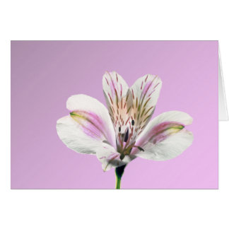 Trumpet Lily Card