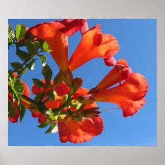 Trumpet Vine Flowers Poster