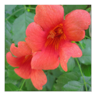 Trumpet Vine Orange Card