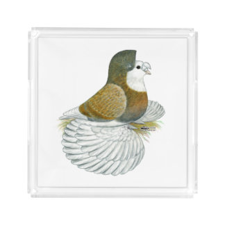 Trumpeter Pigeon AOC Baldhead Acrylic Tray