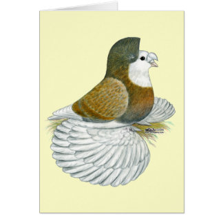 Trumpeter Pigeon AOC Baldhead Card