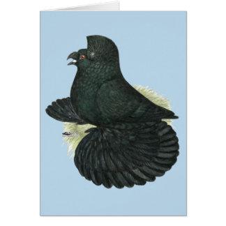 Trumpeter Pigeon Black Card