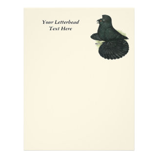Trumpeter Pigeon Black Letterhead