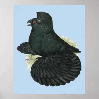 Trumpeter Pigeon Black Poster