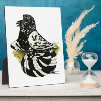 Trumpeter Pigeon Dark Splash Plaque