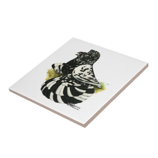 Trumpeter Pigeon Dark Splash Tile