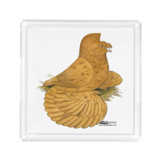 Trumpeter Pigeon Deroy Acrylic Tray
