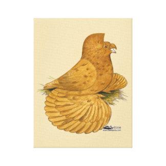 Trumpeter Pigeon Deroy Canvas Print