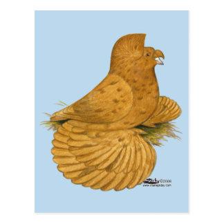 Trumpeter Pigeon Deroy Postcard