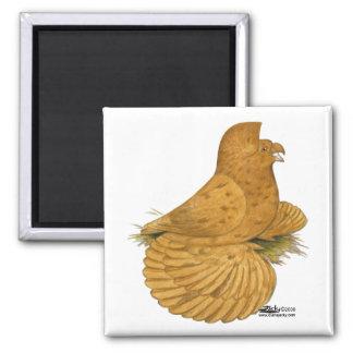 Trumpeter Pigeon Deroy Square Magnet