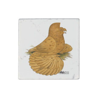 Trumpeter Pigeon Deroy Stone Magnets