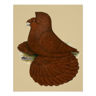 Trumpeter Pigeon Red Poster