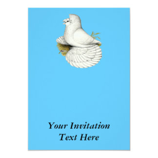 Trumpeter Pigeon White Card