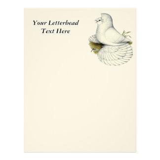 Trumpeter Pigeon White Letterhead