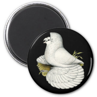 Trumpeter Pigeon White Magnet