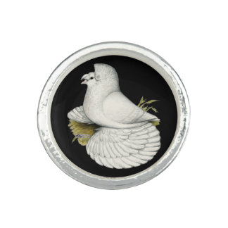 Trumpeter Pigeon White Ring