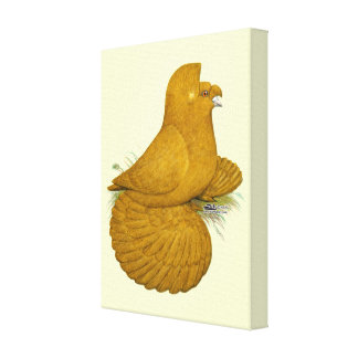 Trumpeter Pigeon Yellow Self Canvas Print