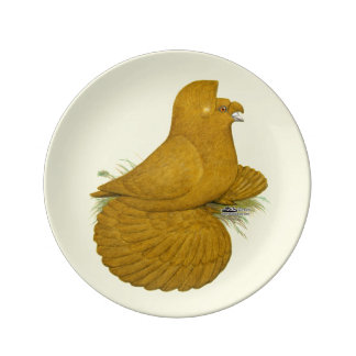 Trumpeter Pigeon Yellow Self Plate