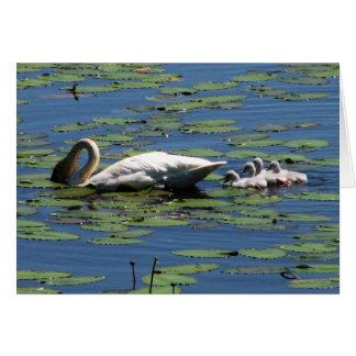 Trumpeter Swan & Cygnets Card