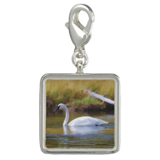 Trumpeter Swan Photo Charms