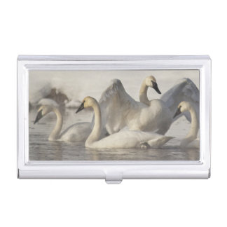 Trumpeter Swans in the Madison River in winter Case For Business Cards