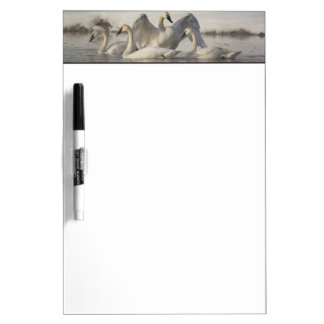 Trumpeter Swans in the Madison River in winter Dry Erase Boards