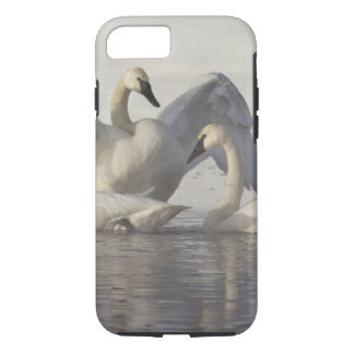 Trumpeter Swans in the Madison River in winter iPhone 7 Case