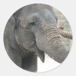 Trumpeting Elephant Sticker