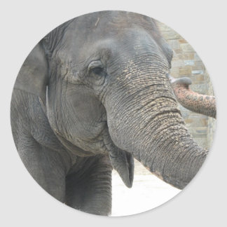 Trumpeting Elephant Sticker