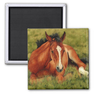 Tuckered Out - Resting Foal Magnet