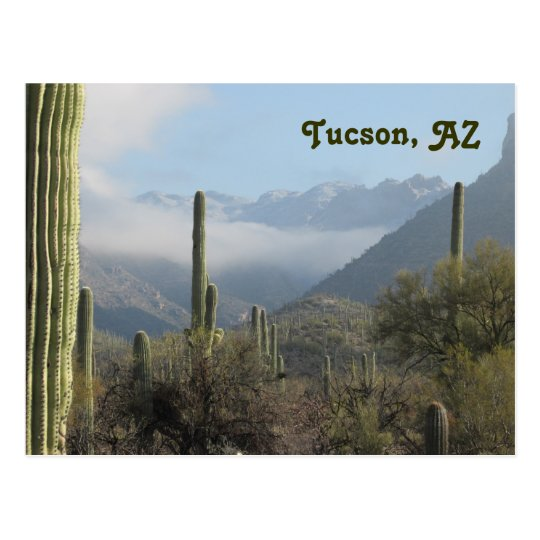 Tucson Arizona Desert Postcard