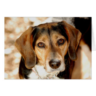Tuffy, the beagle mix card