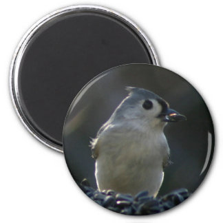 Tufted Titmouse Magnet