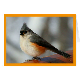 Tufted Titmouse Notecard
